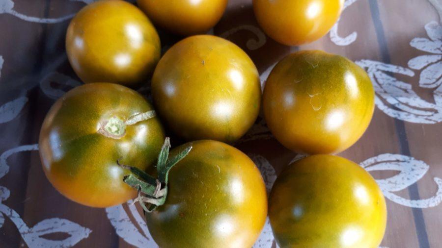 Zielone odmiany pomidorów
