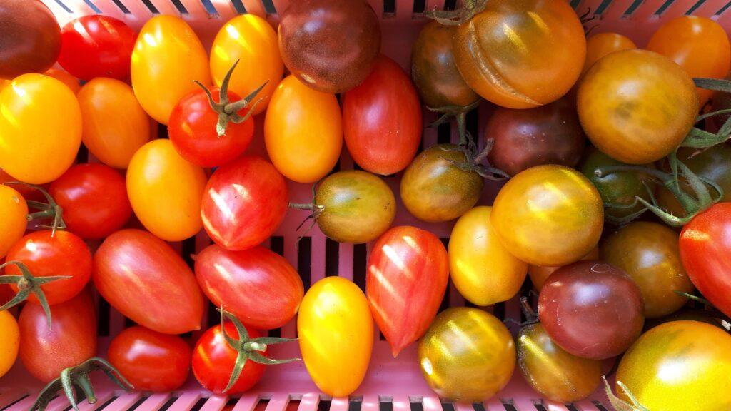 pomidory koralikowe